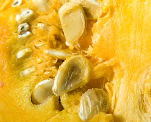 Kürbiskerne - Cucurbitae semen