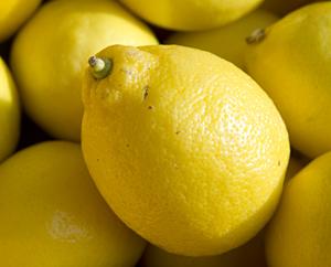 Zitrone - Zitrus lemon