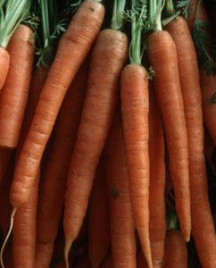 Möhren, Karotten, Gelbe Rüben (Daucus Carota)