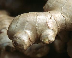 Ingwerwurzel: Zinigberis rhizoma