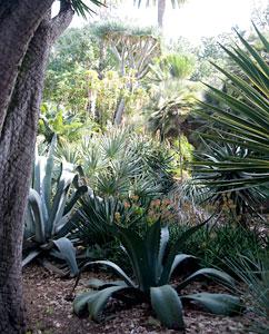 Jardín de la Aclimatatión de La Orotava