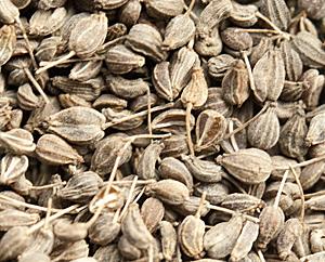 Anis-Früchte (Pimpinella anisum)