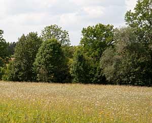 Kraeuterwiesen in Thüringen