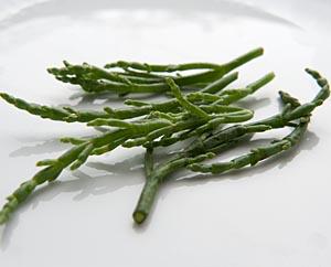 Salicornia roh, knackig und schmackhaft.