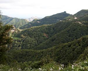 Lorbeerwälder der Nordseite, 10% des ursprünglichen Bestandes