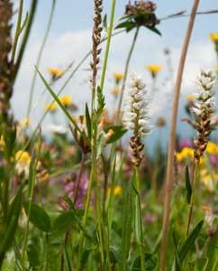 Gräser & Heilpflanzen
