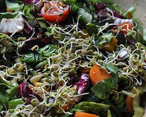 Salat mit Sprossen