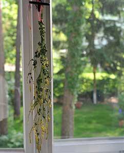 Ein Zweig Steinklee zum Trocknen aufgehängt