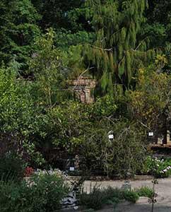 Einblick: Im Hintergrund die Mauer, die den Garten zur Maulbeerallee hin schützt.