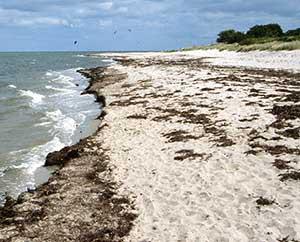 Überall am Strand ist getrockneter Tang.