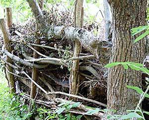 Totholzmauer für Insekten und Kleinstlebewesen