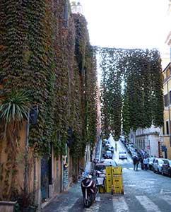 Weinvorhang in der Via Panisperna