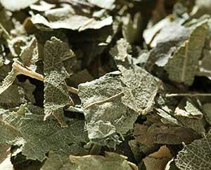 Getrocknete Birkenblätter
