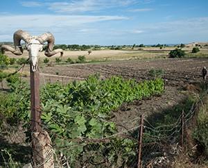 Schafsköpfe werden aufgehängt, um den bösen Blick abzuwenden.