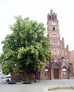 Linde vor dem Rathaus, links am Bildrand, der große Roland