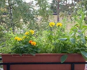 Blumenkasten mit Wildblumen