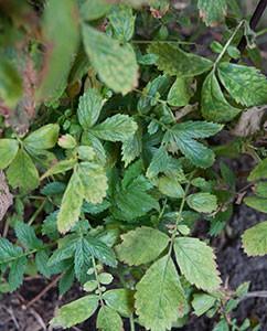 trockne, alte Blätter - so sieht Herbst eher aus