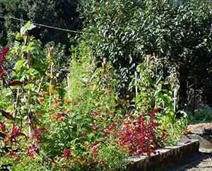 Ein kleiner, privater Gemüse- und Heilpflanzengarten