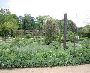 Arzneipflanzen-Garten im Botanischen Garten