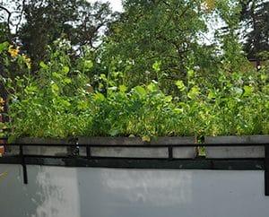 Wildblumen auf dem Balkon