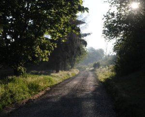 Kleiner Feldweg