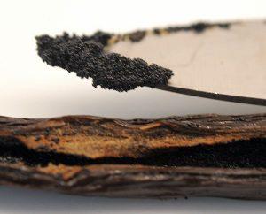 Samen aus der ölig, wohlriechenden Schote